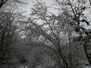Schnee im Wald#2 - Baum, kahle Bäume, kahl, unbelaubt, Winter, Landschaft, Winterlandschaft, Schneelandschaft, Schnee, Schneedecke, verschneit, Kälte, Einsamkeit, Ruhe, Stille, Schreibanlass, Meditation