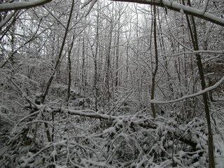 Schnee im Wald#5 - Baum, kahle Bäume, kahl, unbelaubt, Winter, Landschaft, Winterlandschaft, Schneelandschaft, Schnee, Schneedecke, verschneit, Kälte, Einsamkeit, Ruhe, Stille, Schreibanlass, Meditation