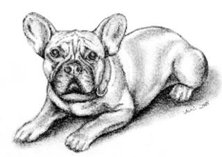 Barney  - Hund, Französische Bulldogge, Haustier, Tier, Anlaut H, Illustration
