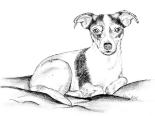 Amy - Jack Russell Terrier, Hund, Haustier, Tier, Anlaut H, Illustration