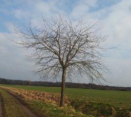 Baum im Frühling - Baum, Landschaft, Frühling, Sonne