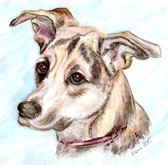 Rocky - Hund, Mischling, Haustier, Tier, Anlaut H, Illustration