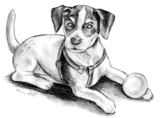 Amy als Welpe - Hund, Welpe, Jack Russell Terrier