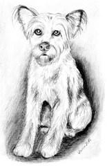 Naomi - Hund, Mischling, Haustier, Tier, Anlaut H, Illustration