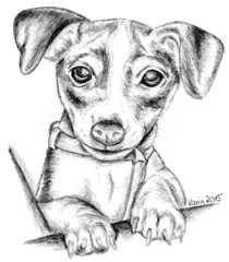 Amy als Welpe - Welpe, Hund, Jack Russell Terrier, Haustier, Anlaut H, Illustration
