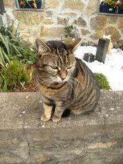 Katze#1 - Katze, Hauskatze, Haustier, Pose, posieren, sitzen