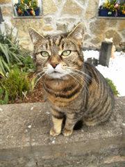 Katze#2 - Katze, Hauskatze, Haustier, Pose, posieren, sitzen