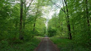 Waldweg - Wald, Weg, Frühling, Blätter, grün, Perspektive, Meditation, Schreibanlass