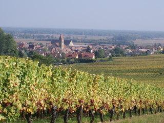 Alsace - Elsass - Elsass, Weinberg, Weinstock, Dorf, Wein