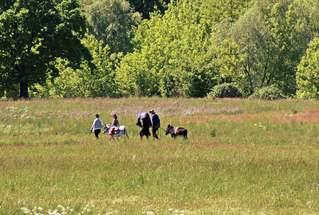 Spaziergang in den Feuchtwiesen - Spaziergang, spazieren, laufen gehen, erholen, Freude, bewegen, Gruppe, Frühling, Sommer, Pfingsten, Wiese, Feuchtwiese, entspannen, Natur, Impression, Schreibanlass, Ausflug, Freizeit, Freunde, Urlaub, Bäume, Impuls, Wanderung, wandern, Weg, Wege, Umland, Land, Landschaft, landschaftlich, fröhlich