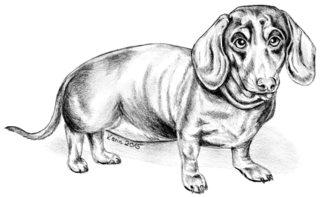 Dachshund Willi - Dachshund, Dackel, Teckel, Hund, Haustier, Tier, Wörter mit ck