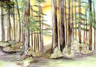 Wald - Wald, Baum, Bäume, Forstwirtschaft, Landschaftstyp, Schreibanlass, Erzählanlass, Märchen, Rotkäppchen, Stamm, Baumstamm, Hänsel und Gretel