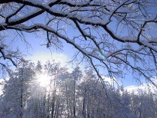 Winterimpression - Winter, Schnee, Landschaft, Baum, Ruhe