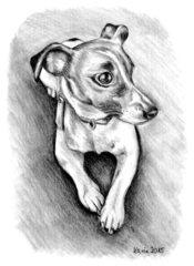 Spike - Jack Russell Terrier, Hund, Haustier, Anlaut H, Illustration