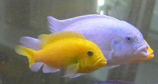 Zierfische #1 - Fisch, Zierfisch, Aquarium, Meditation, Schreibanlass
