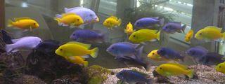 Zierfische #2 - Fisch, Zierfisch, Aquarium, Ruhe, Schreibanlass, Meditation