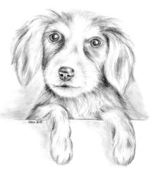 Mike - Bernersennenwelpe - Welpe, Hund, Haustier, Tier, Anlaut H, Illustration
