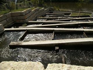 Fischtreppe - Fischweg, Fischtreppe, Fischpass, Fischwanderung, Gewässer, Fluss, Fisch, Fische, Wehr, Wasserfall, Aufstieg, Abstieg, Hilfe, Wasser, Ökologie, Naturschutz