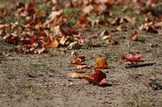 erste Herbstboten #3 - Herbstfarben, Herbst, Blattfärbung, Sonne, Himmel, Herbstlaub, Laub, Blätter, bunt, Jahreszeit, Ahorn, Sonne, Impression, Meditation, Hintergrund, Stimmung, Farbenspiel, Farbe, liegen