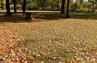 Herbstboten #7 - Herbstfarben, Herbst, Blattfärbung, Sonne, Himmel, Herbstlaub, Laub, Blätter, Blatt, Licht, Schatten, Park, Boden, bunt, Ahorn, Jahreszeit, Sonne, Impression, Meditation, Hintergrund, Stimmung, Farbenspiel, Farbe, liegen