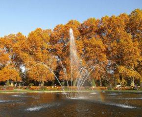 Herbstimpression - Herbst, Herbstfarben, Wald, Bäume, Laubfärbung, Springbrunnen