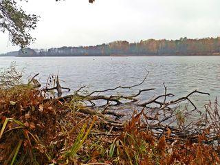 Herbstimpression am See - Herbst, Jahreszeit, See, Stille, Ruhe, Meditation, bedeckt, Stimmung, Wetter, See, Seeufer, kahle Bäume, Schilfbewuchs