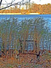 Novembermorgen am See - Herbst, Jahreszeit, See, Stille, Ruhe, Meditation, bedeckt, Stimmung, Wetter, See, Seeufer, kahle Bäume, Schilfbewuchs, Steg