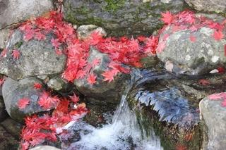Herbststimmung 2 - Herbststimmung, Herbststimmung, Laub, Ahornblätter, Färbung, Herbst, Wasser