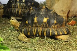 Schildkröte - Schildkröte, Panzer, Reptil, langsam, Tier
