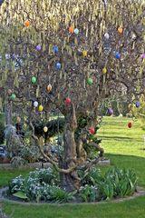 Ostern  -Frühling - Weide, Blütenstand, Frühling, Frühjahr, blühen, Blätter, Salix, Laubbaum, Blatt, Ast, Korkenzieherweide, Frühblüher, Schneeglöckchen, Ostern, Eier, Ostereier, bunt, Dekoration, Symbol, blühen