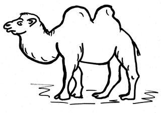 Kamel - Kamel, Trampeltier, Wüstenschiff, Säugetier, Zoo, Wüste, Höcker, zwei, Anlaut K, Tier, Lastenträger, Zeichnung