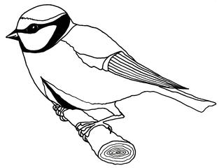 Meise ohne Pfeile/Beschriftung - Vogel, Sperlingsvogel, Singvogel, Meise, Anlaut M, Wörter mit ei