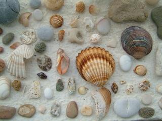 Muscheln - Biologie, Muscheln, Muschel, Steine, Sand, Strand, Ufer, sammeln, Schreibanlass