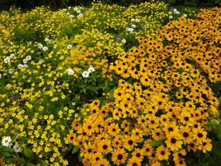 So blüht der Sommer - Sommer, Blume, Blumen, Sommerblumen, Stauden, Beet, Blumenbeet, Gartenbeet, Blüten, blühen, duften