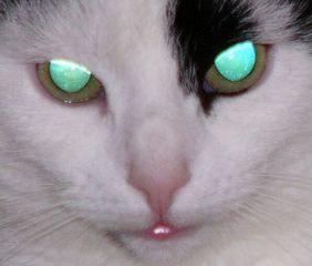 Glühaugen - Katze, Haustier, Tapetum lucidum, Glühaugen, Katzenaugen, Tier, Portrait