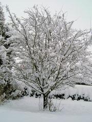 Baum im Schnee - Winter, Schnee, Baum, Jahreszeit, weiß, verschneit, schneien, kahl