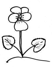 Veilchen - Veilchen, Viola, Blume, Blüte, Blätter, herzförmig, Anlaut V, Pflanze, Zeichnung, Blütenblätter, Frühblüher