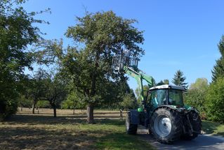 Apfelernte - Apfel, Ernte, Obst, Traktor