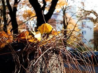 Herbstansicht - Jahreszeit, Stille, Ruhe, Meditation Blattwerk, Herbst, Lichtspiel, Herbstfarben, herbstlich, Blattfärbung, Licht, Herbstlaub, Laub, Blätter, bunt, Impression, Meditation, Stimmung, Farbenspiel, Farbe, Oktober