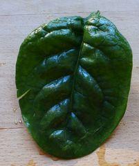 Spinat - Spinat, Blatt, Spinatblaetter, Gemüse, eins, grün