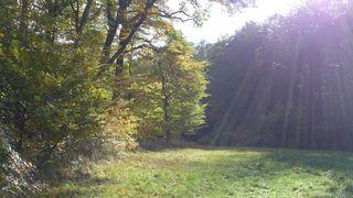 Herbstwald #1 - Herbstfarben, Herbst, Blattfärbung, Sonne, Himmel, Herbstlaub, Laub, Blätter, bunt