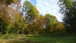 Herbstwald #2  - Herbstfarben, Herbst, Blattfärbung, Sonne, Himmel, Herbstlaub, Laub, Blätter, bunt