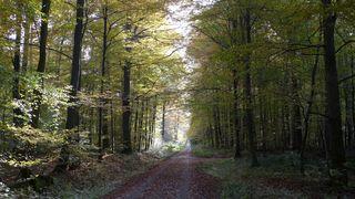 Waldweg  - Herbstfarben, Herbst, Blattfärbung, Sonne, Himmel, Herbstlaub, Laub, Blätter, bunt, Weg, Wald