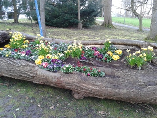 Alternatives Blumenbeet - Frühling, Frühblüher, Narzissen, Primeln, Vergissmeinnicht, Gänseblümchen, Märzenbecher, bunt, Blumenbeet, viele, Beet, baumstamm, Hohl, morsch