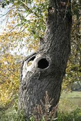 (fast) abgestorbener Baum - Herbst, Bäume, Natur, Ruhe, Ernte, Acker, Rinde Blätter, Herbst, Laub, Laubfall, Herbstlaub, herbstlich, Jahreszeiten, Vergänglichkeit, Schreibanlass, Meditation, Halloween