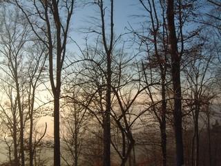 Winterstimmung - Winter, Stimmung, Baum, kahl, kalt, Kälte, Zweige, Wald, Bäume, Meditation, Kontrast