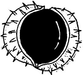 Kastanie in der Schale - Kastanie, Rosskastanie, stachelig, Samen, Laubbaum
