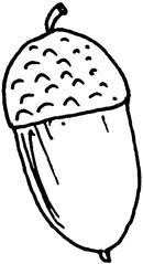 Eichel  (1) - Frucht, Eiche, Stieleiche, Eichel, Hut, Laubbaum, Anlaut Ei