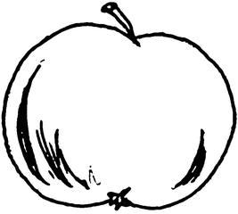 Apfel - Apfel, Obst, Frucht, Illustration, Anlaut A