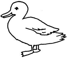 Ente - Ente, Tier, Vogel, Anlaut E